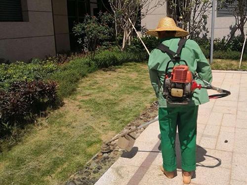 绿化养护案例